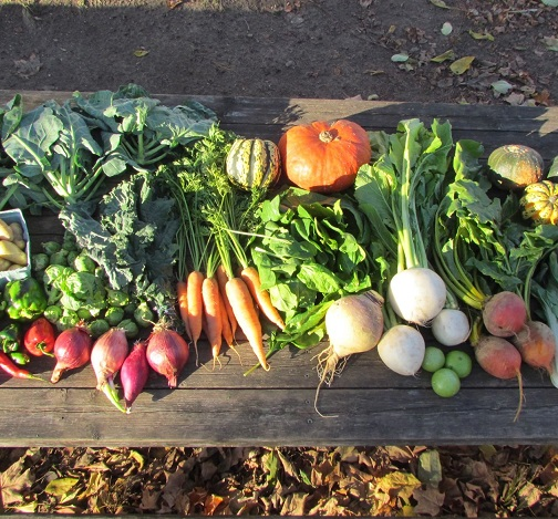 Extended Fall CSA